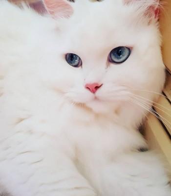 avatar for Mima